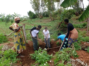 Planting banana trees in Gicaca, it was wonderful but hard work!
